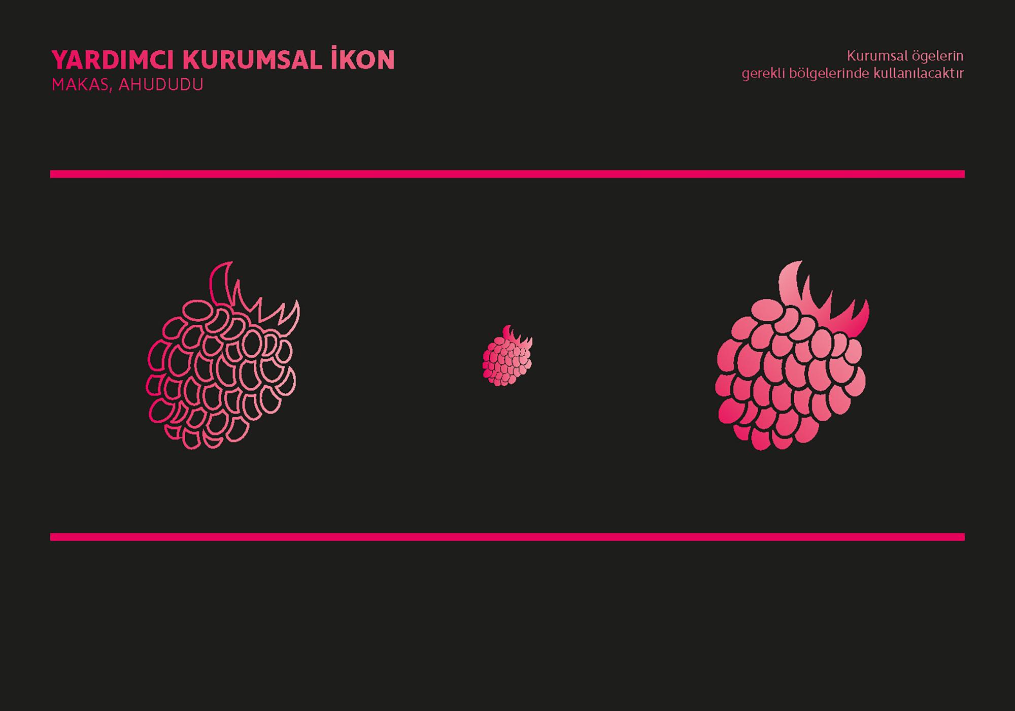Ankara kurumsal kimlik tasarımı  Raspberry